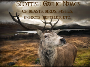 Scottish Gaelic Names of…