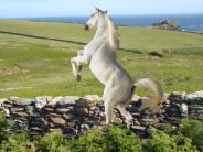 Dance Horse, Dance!