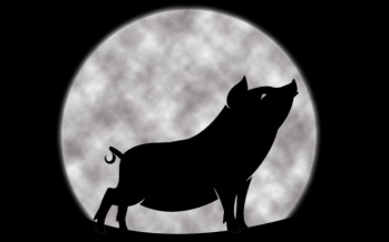 Pigs and the Moon