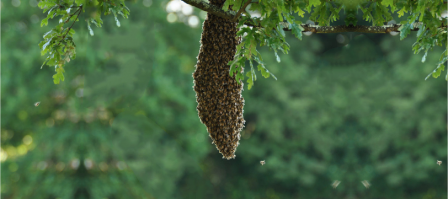 When Bees Swarm