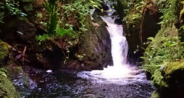 The Nikkesen's Pool, Lonan