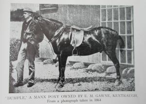 manx-pony1