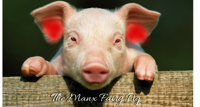 The Manx Fairy Pig