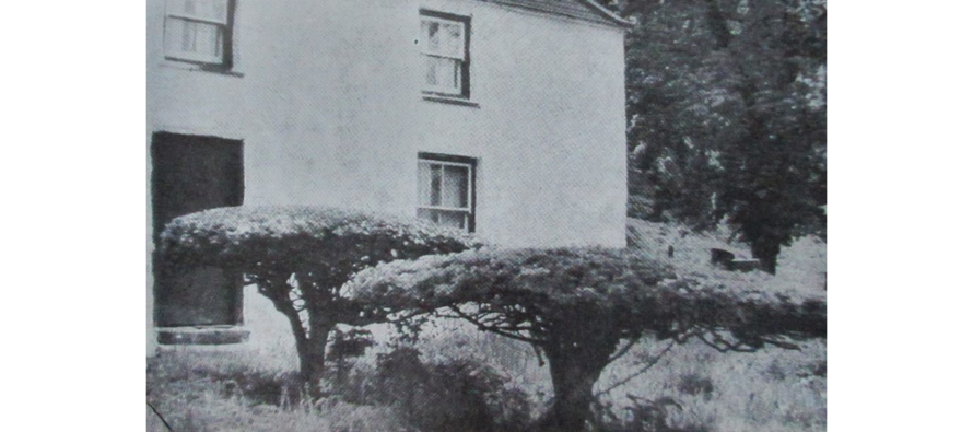 The Drine Skeg (Hawthorn Hedge)