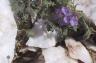 White Stones & Burials